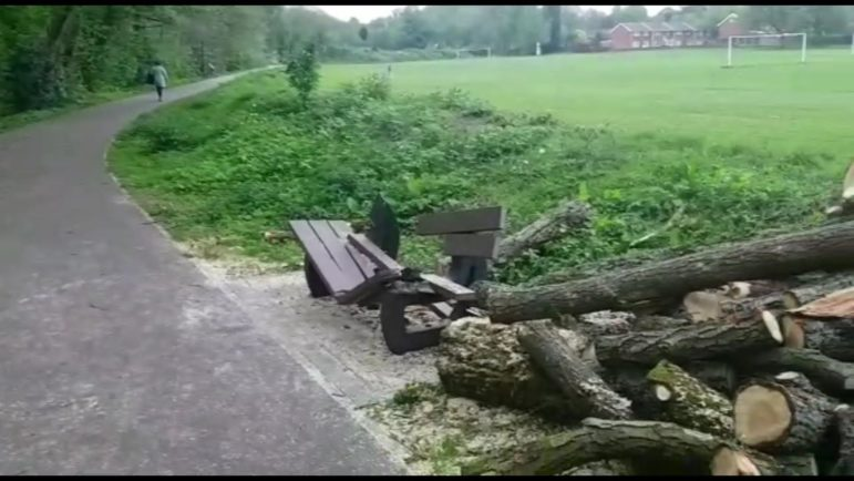 A bench crushed by branches that were cut off a tree